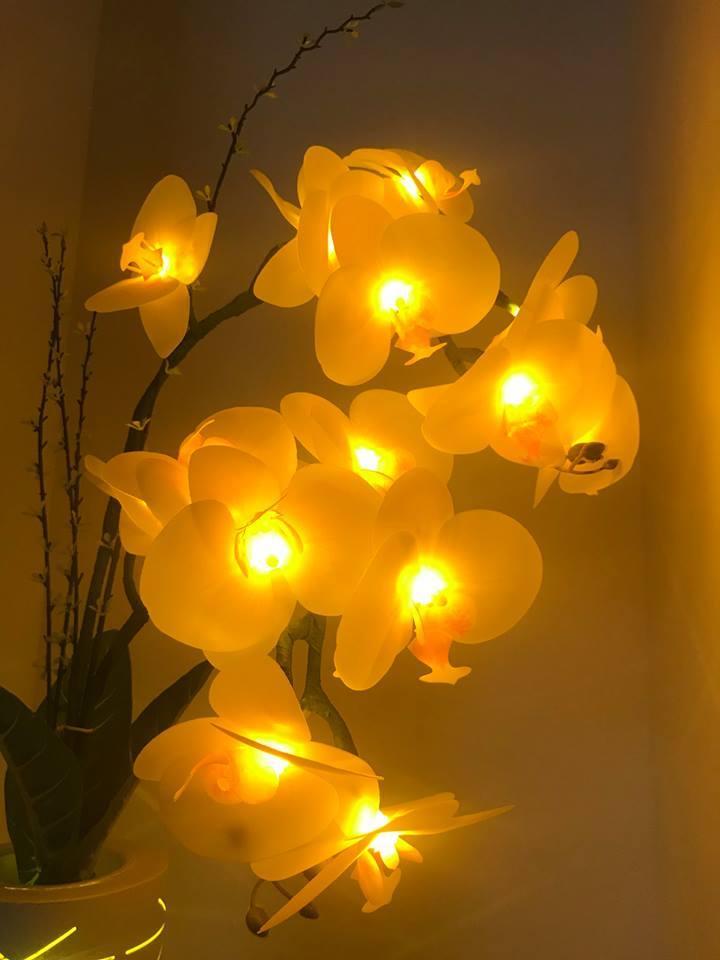 LED Butterfly orchid lamp 4W 50hz  Warranty 3 years